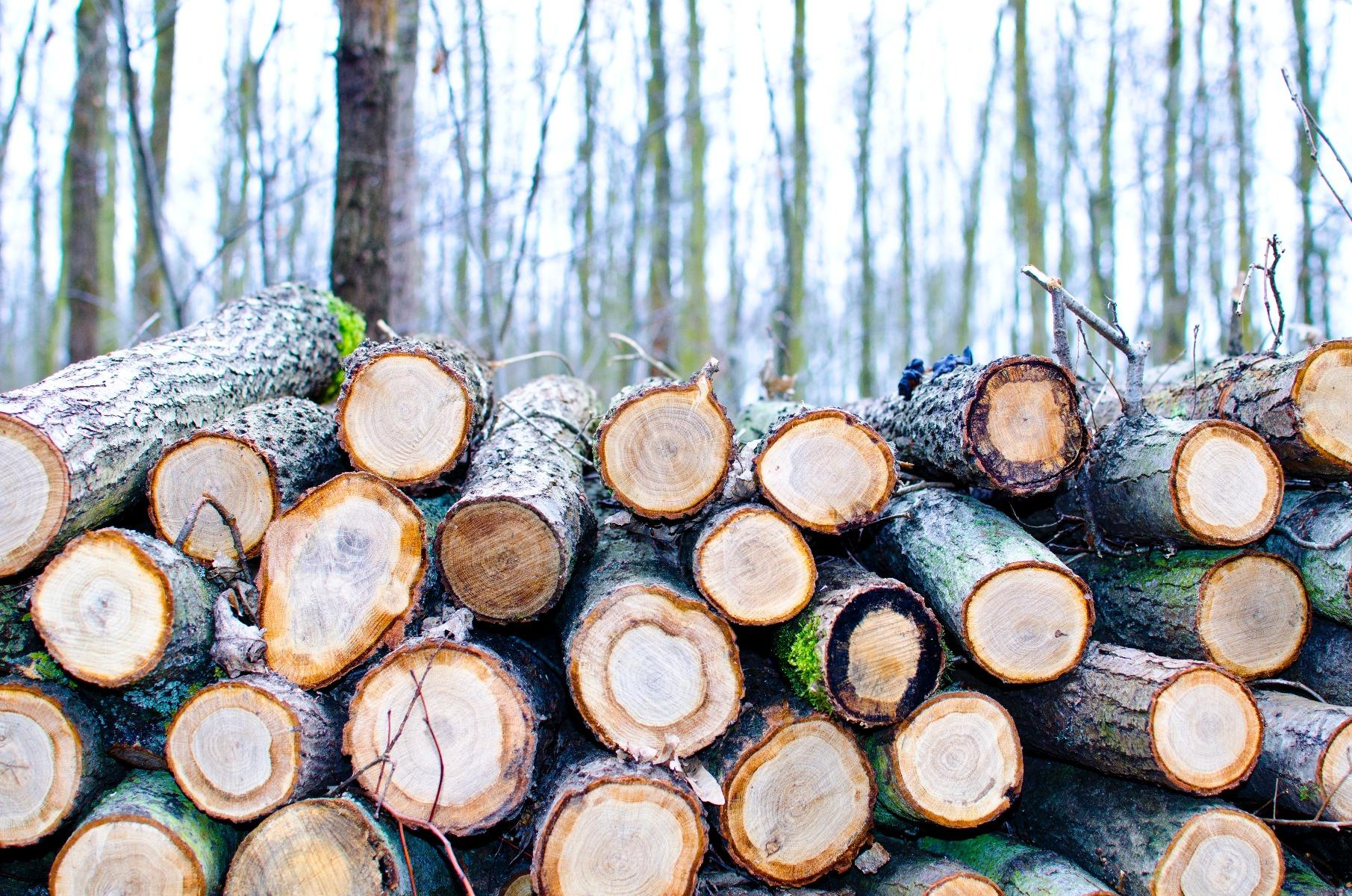 Minimal Impact Logging : How to Take the Trees You'll Use Without Damaging the Rest